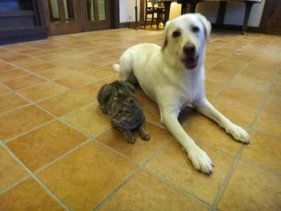 不思議な猫の物語(ホスト猫となるー犬とのツーショット編5)_f0064906_1415722.jpg