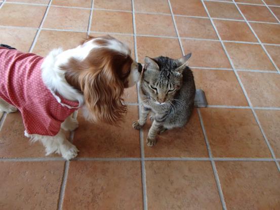不思議な猫の物語(ホスト猫となるー犬とのツーショット編5)_f0064906_14161688.jpg
