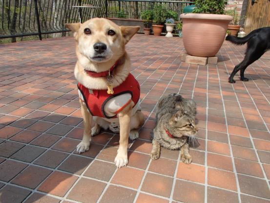 不思議な猫の物語(ホスト猫となるー犬とのツーショット編5)_f0064906_14163065.jpg