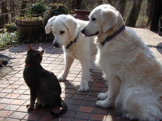不思議な猫の物語(ホスト猫となるー犬とのツーショット編5)_f0064906_14164158.jpg