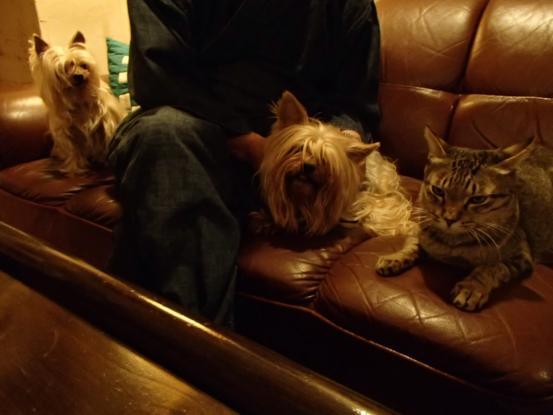 不思議な猫の物語(ホスト猫となるー犬とのツーショット編5)_f0064906_1416583.jpg