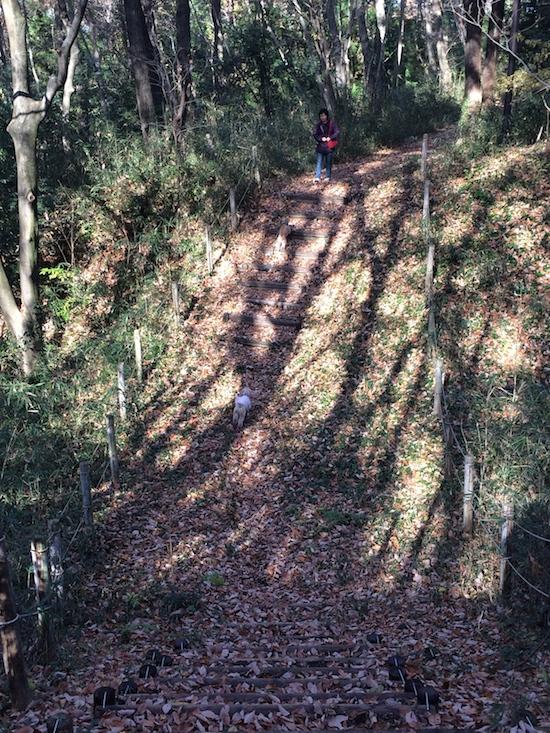 三年半ぶりの森林公園_b0067012_222386.jpg