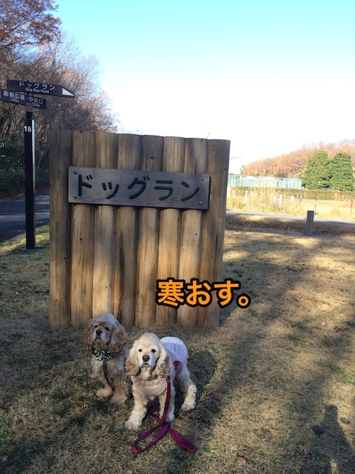 三年半ぶりの森林公園_b0067012_273021.jpg