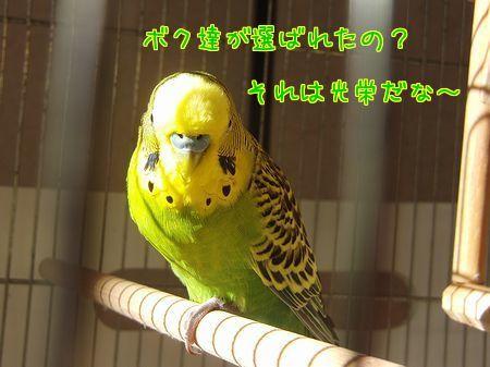 f0196665_1116441.jpg
