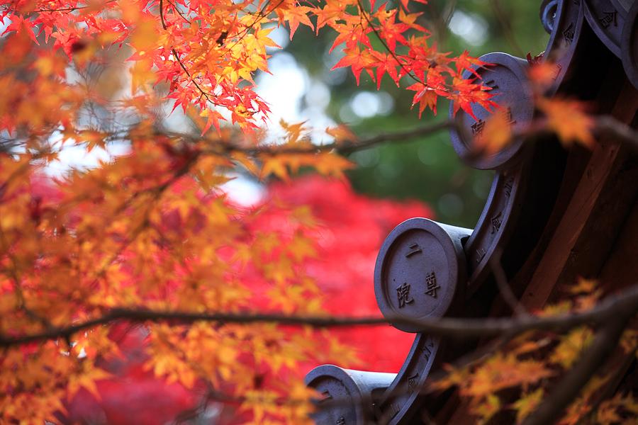 紅葉まつりシーズン!京都に行くなら11月中旬!
