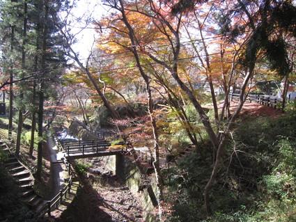 紅葉~落葉    by   (ナベサダ)_f0053885_19233547.jpg