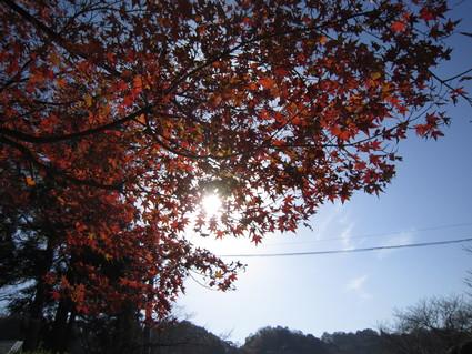 紅葉~落葉    by   (ナベサダ)_f0053885_19243137.jpg