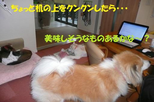 f0121712_162049.jpg