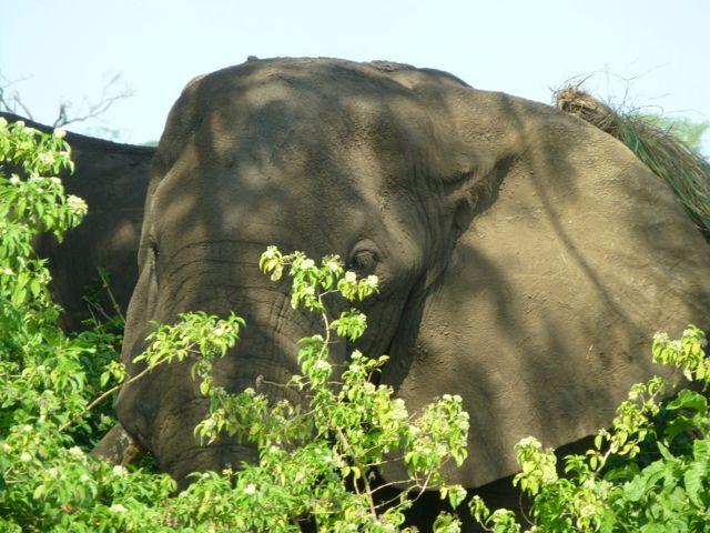 ウガンダ旅行記ー動物編1ークィーンエリザベス国立公園_f0096017_0271993.jpg