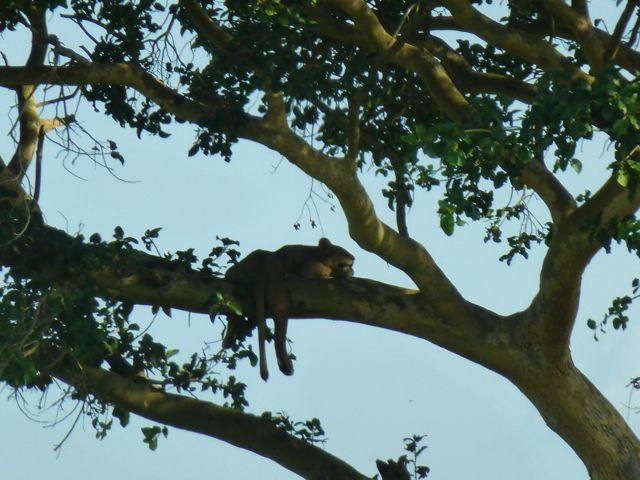 ウガンダ旅行記ー動物編1ークィーンエリザベス国立公園_f0096017_0372100.jpg