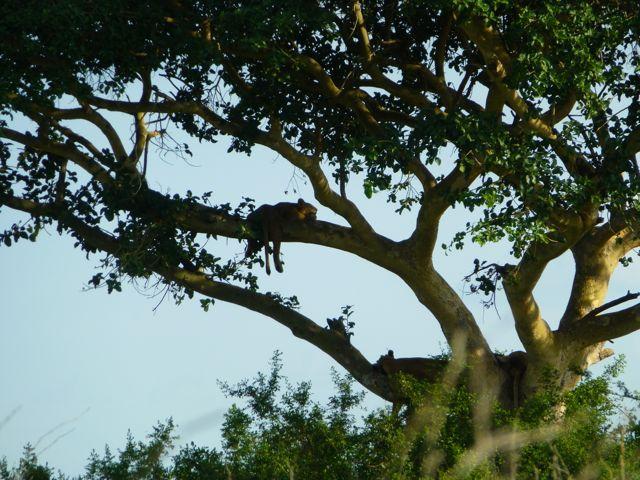 ウガンダ旅行記ー動物編1ークィーンエリザベス国立公園_f0096017_037356.jpg