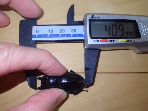サイズ測定~♪・・・デジタルノギス購入_a0315918_20251724.jpg