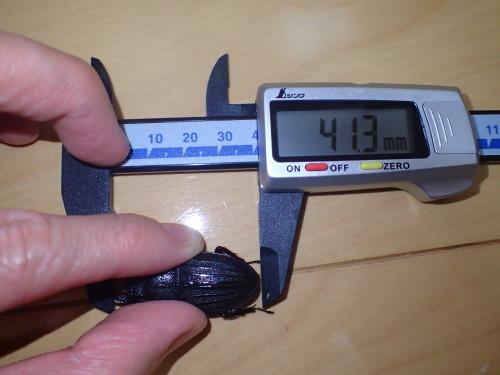 サイズ測定~♪・・・デジタルノギス購入_a0315918_20252763.jpg