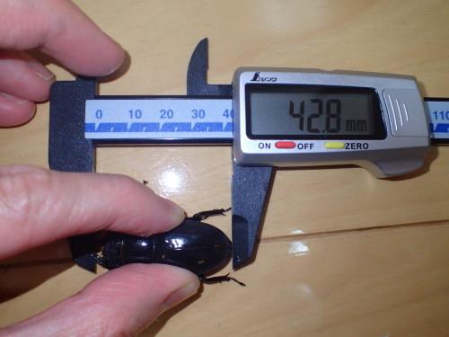 サイズ測定~♪・・・デジタルノギス購入_a0315918_20254054.jpg