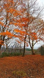 倶利伽羅県定公園周辺紅葉情報_c0208355_9234535.jpg