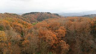 倶利伽羅県定公園周辺紅葉情報_c0208355_9391296.jpg