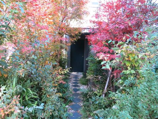 庭は劇的に変わるので楽しい_d0021969_10232979.jpg