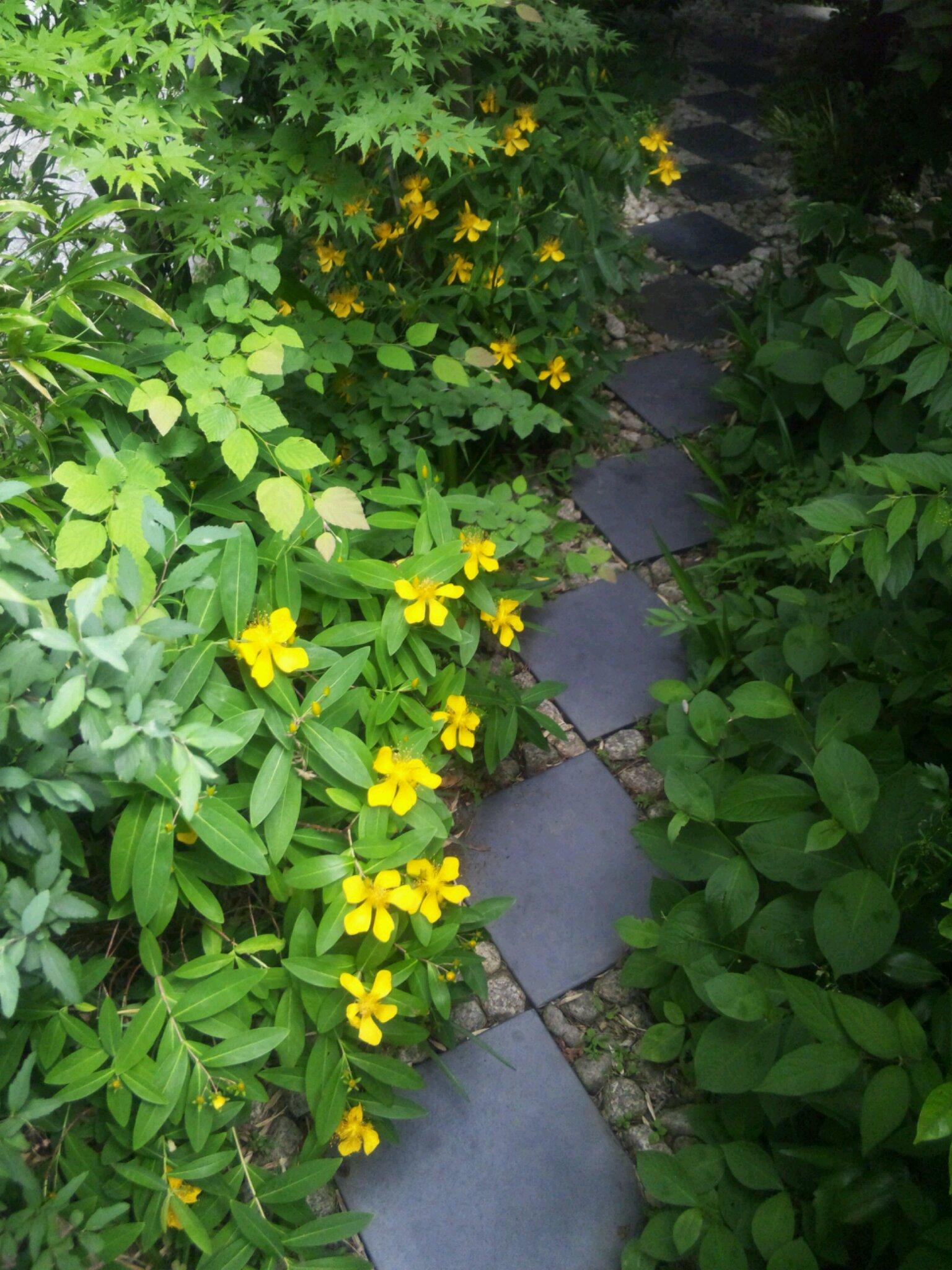 僕の家の庭に今年咲いた黄色い花たち_d0021969_149677.jpg
