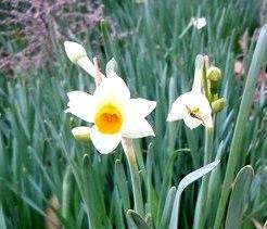 路傍の花、樹々の鳥(55) ~ まだまだ遠い春への準備 ~_b0102572_132778.jpg