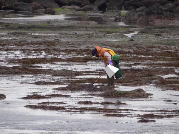 初冬の西海岸ドライブ 風合瀬の海岸清掃のことなど_a0136293_17415415.jpg