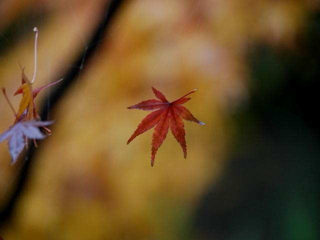 さよなら秋色_f0147895_1821350.jpg