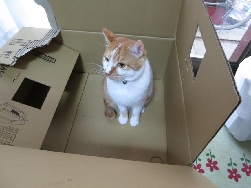 【猫】お気に入りなのに_f0141609_166092.jpg
