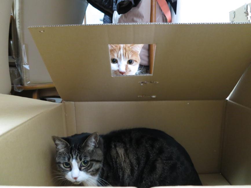 【猫】お気に入りなのに_f0141609_166185.jpg