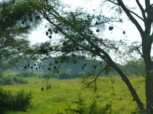 ウガンダ旅行記ーその他動物、1部グロいかもw_f0096017_17141142.jpg