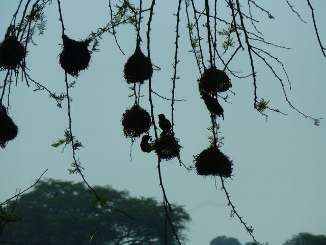 ウガンダ旅行記ーその他動物、1部グロいかもw_f0096017_17144222.jpg