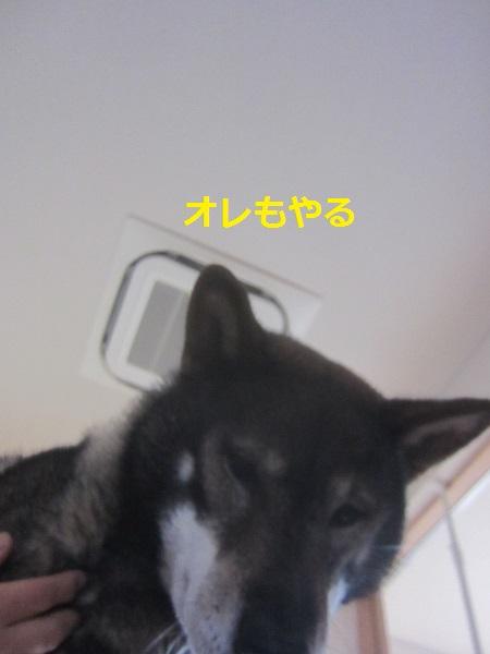 f0143123_19454787.jpg