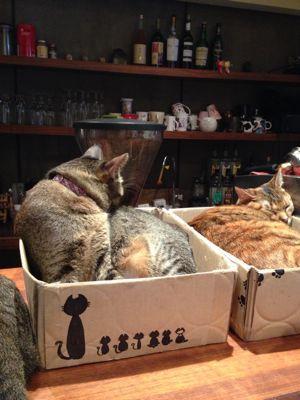 ☆猫カフェとパブロンの神隠し☆(台湾旅行1日目)_b0203925_13191279.jpg