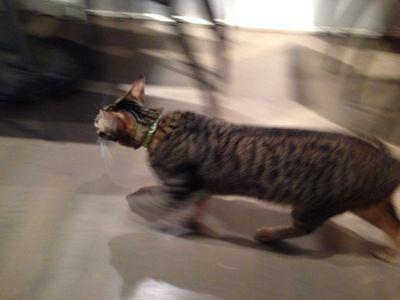 ☆猫カフェとパブロンの神隠し☆(台湾旅行1日目)_b0203925_13191871.jpg