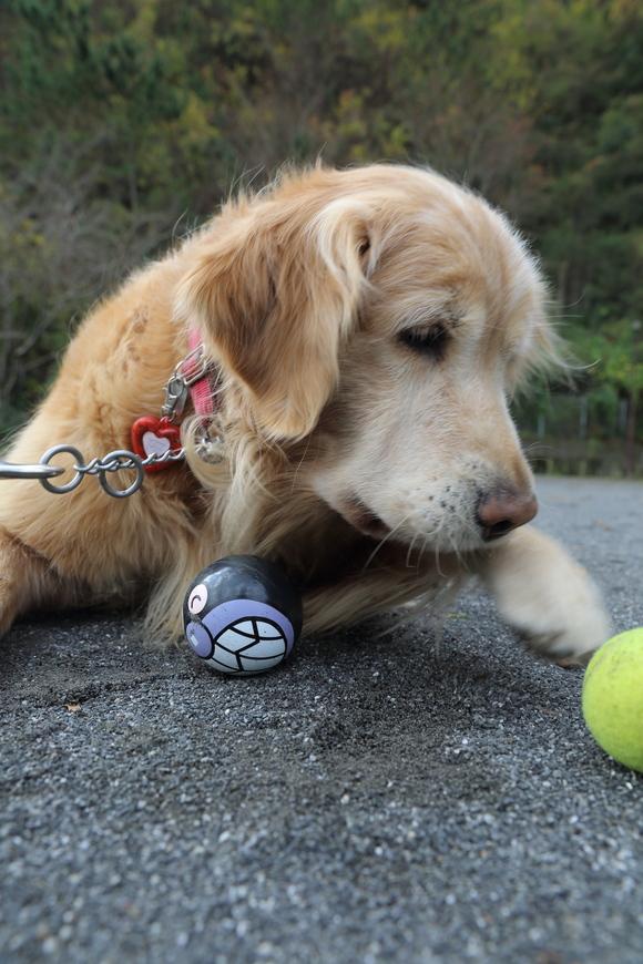 バイキンマンとテニスボールと。_b0275998_11252683.jpg