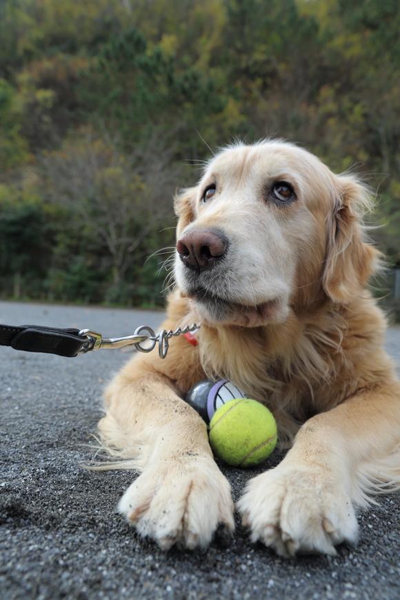 バイキンマンとテニスボールと。_b0275998_11284763.jpg