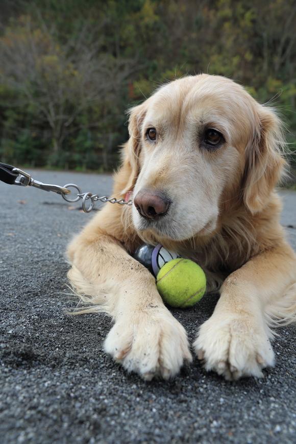 バイキンマンとテニスボールと。_b0275998_11292465.jpg