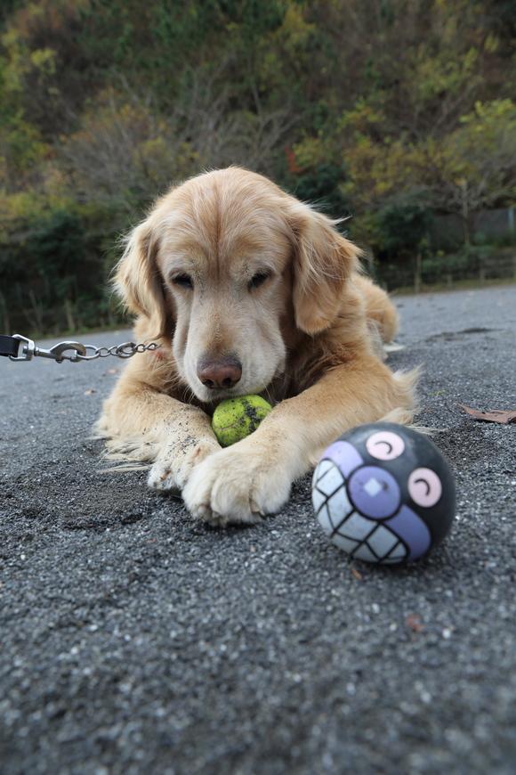 バイキンマンとテニスボールと。_b0275998_11313299.jpg