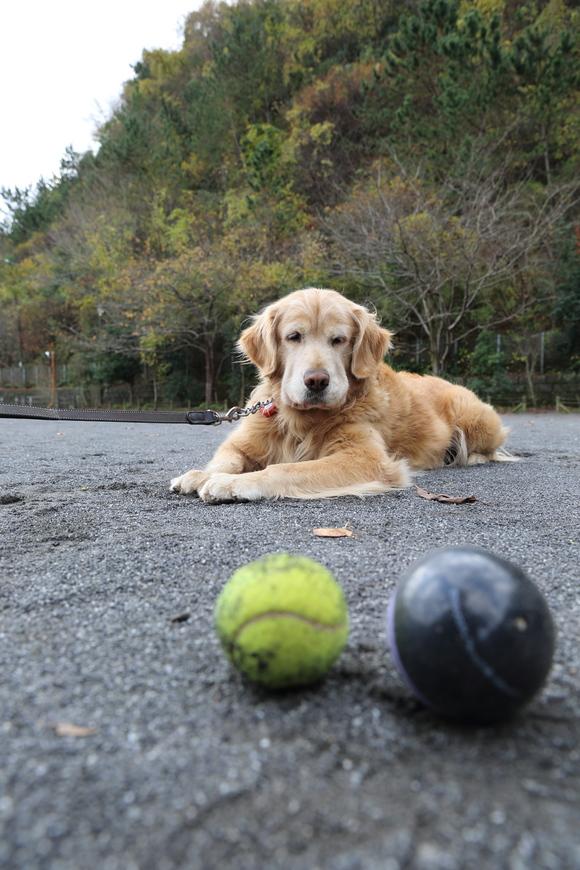 バイキンマンとテニスボールと。_b0275998_11315334.jpg