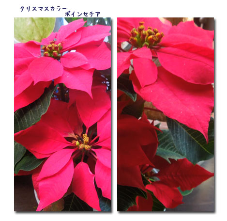 冷たい風_c0051105_22572175.jpg