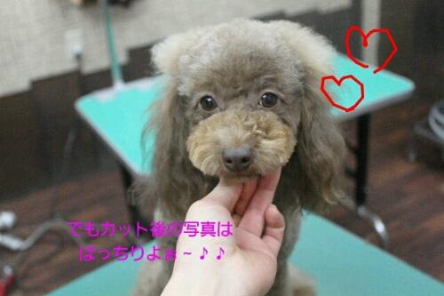 安室ちゃん_b0130018_0284999.jpg