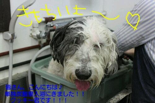 安室ちゃん_b0130018_030341.jpg