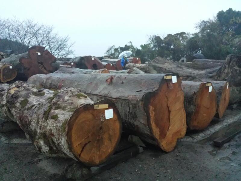 材木市場_e0155231_11182968.jpg