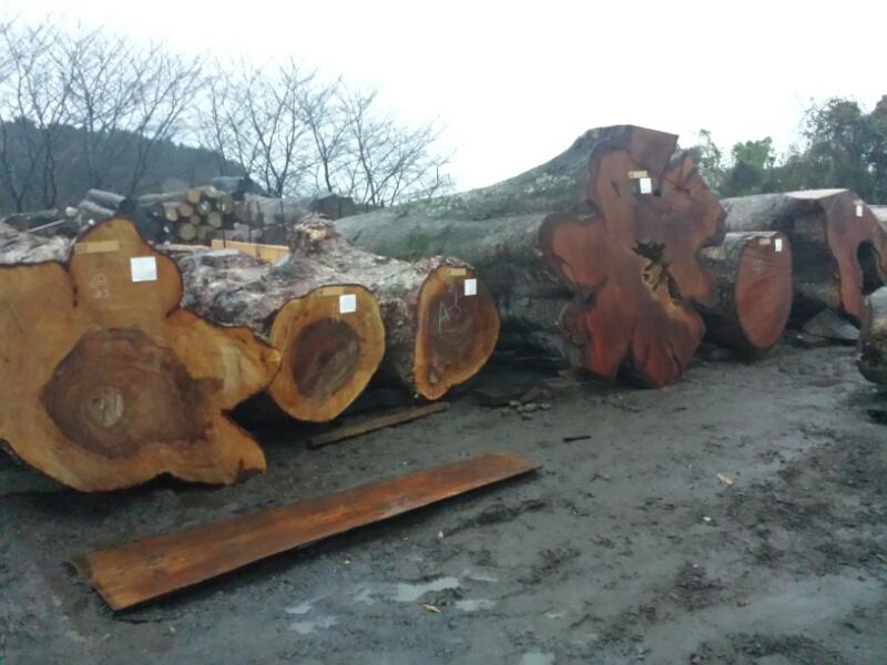 材木市場_e0155231_11184521.jpg