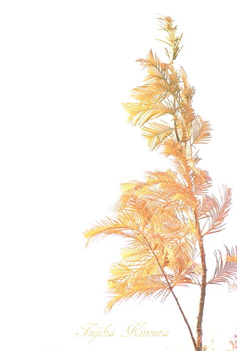 ■■ あきふゆいろのびんせん ~2014 December~ ■■_c0195662_2294454.jpg