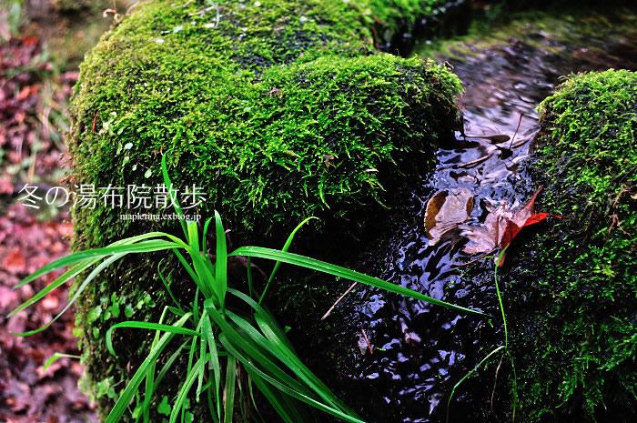 冬の湯布院散歩①_f0234062_2214899.jpg