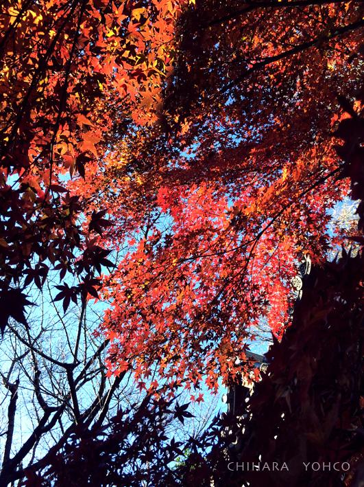 雑司ヶ谷界隈歩き_d0138811_15353989.jpg