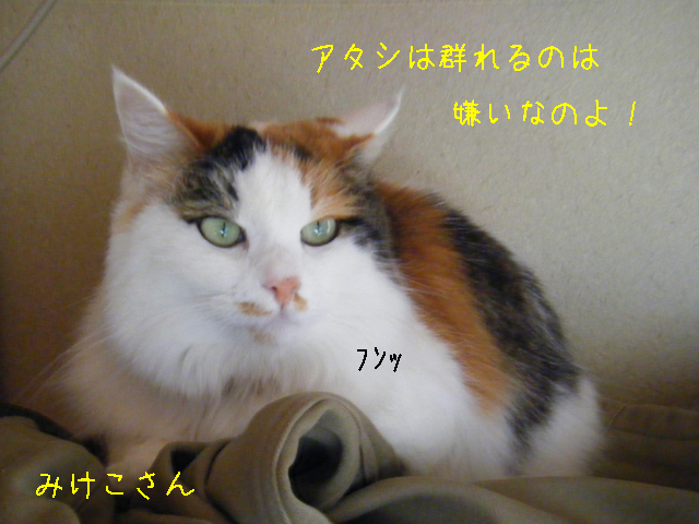 f0008935_14385638.jpg