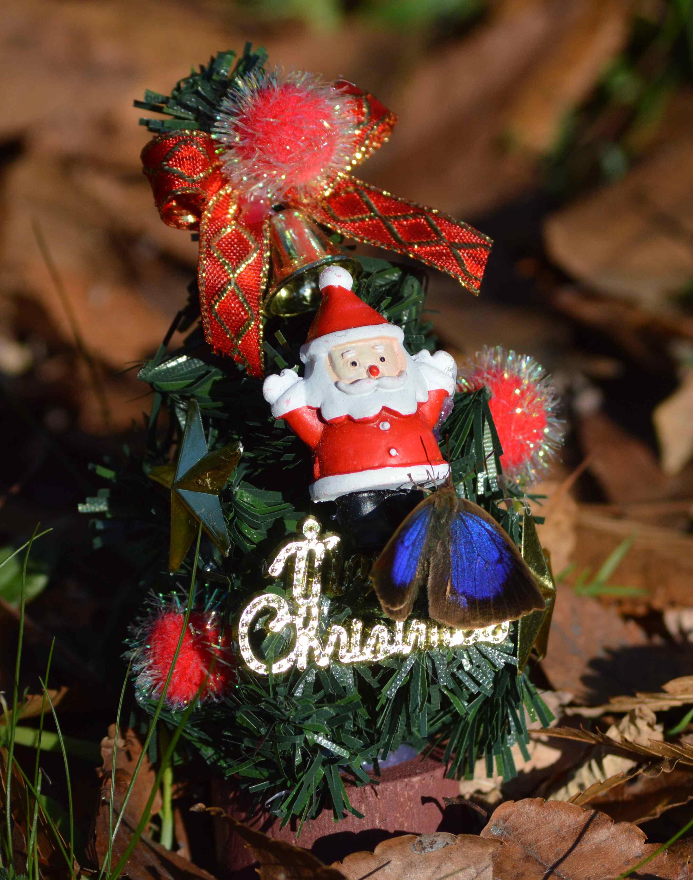 ムラサキシジミ Merry Christmas_d0254540_14273094.jpg