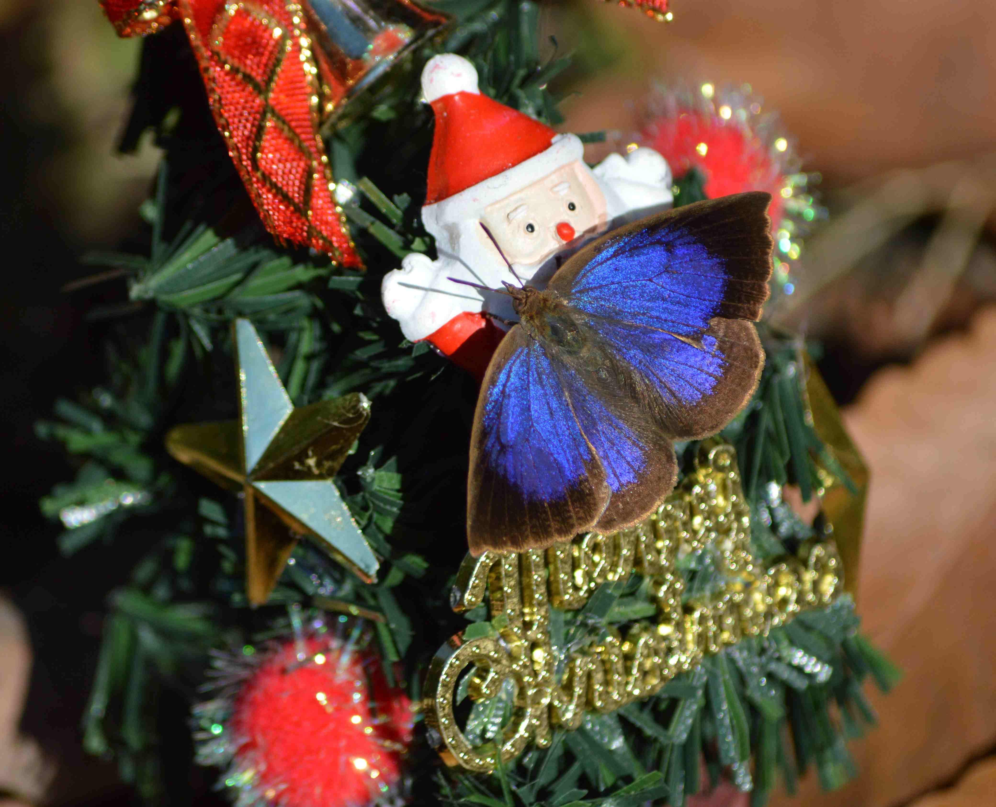 ムラサキシジミ Merry Christmas_d0254540_1428309.jpg