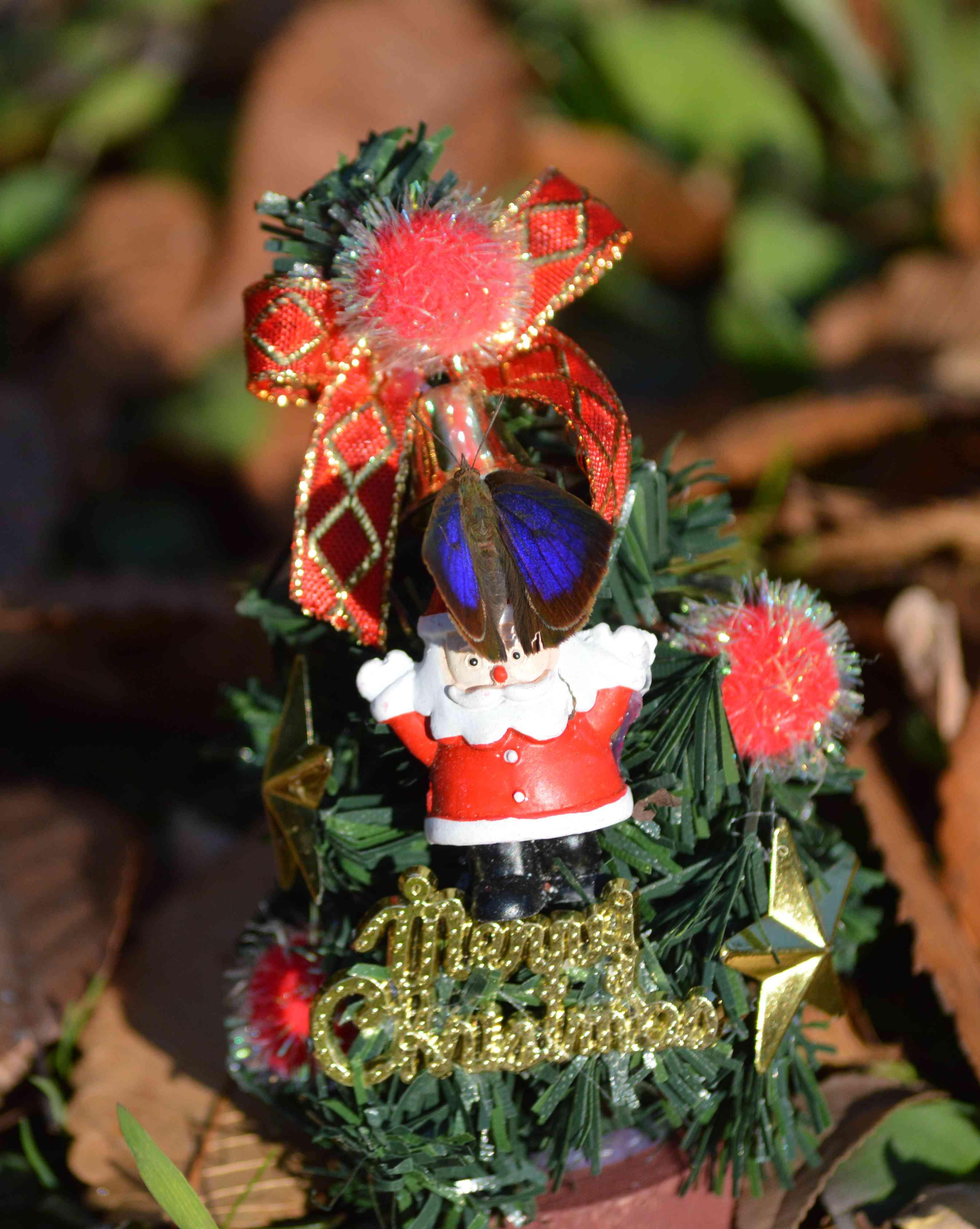 ムラサキシジミ Merry Christmas_d0254540_1428939.jpg