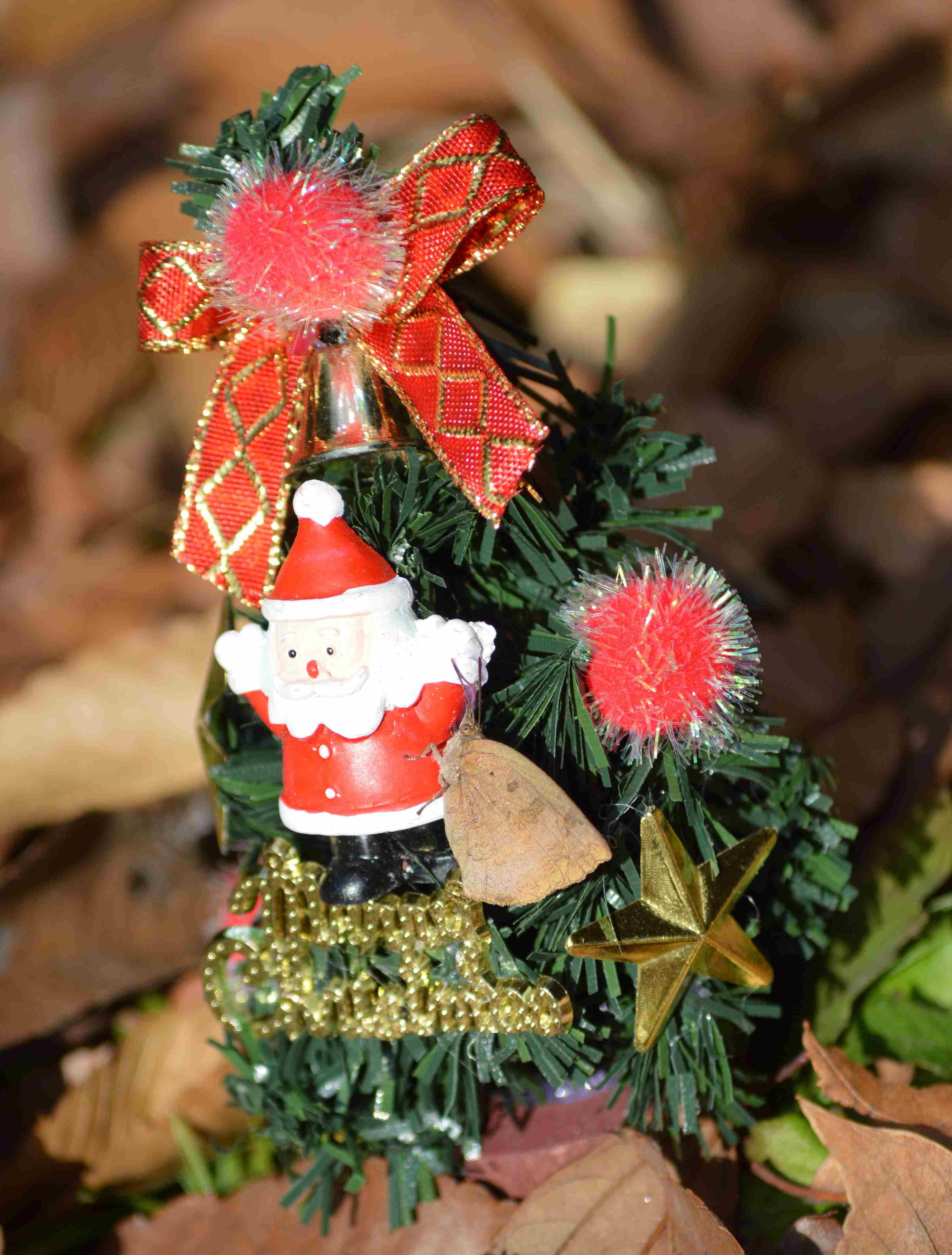 ムラサキシジミ Merry Christmas_d0254540_14292787.jpg